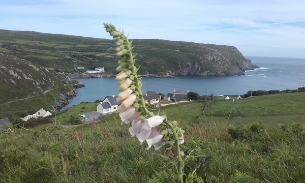 View of South Harbour, Cape Clear Island.